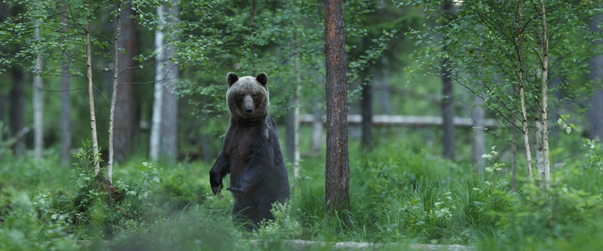Bear Watching and Nature Tours in Estonia