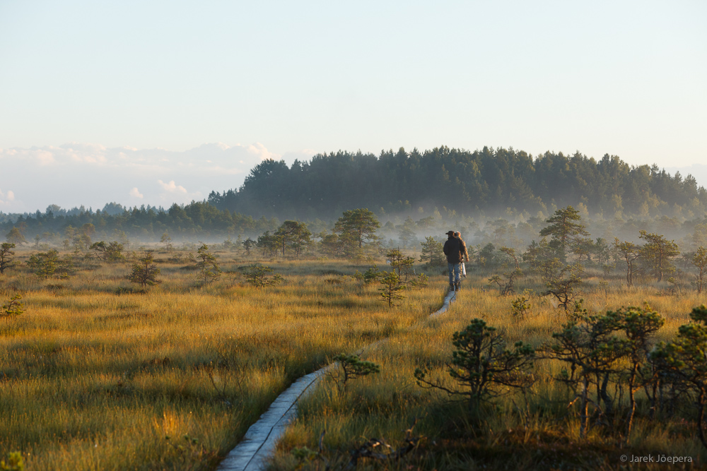 Autumn morning in a peat bog