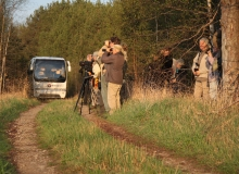 Birding in Estonia