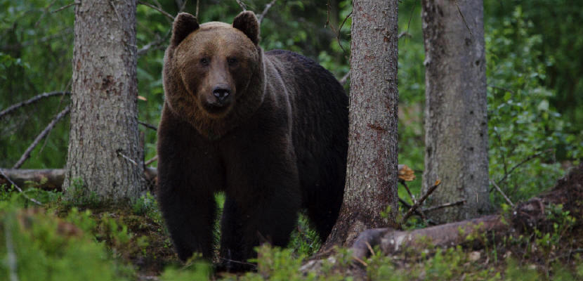 a look at the habitat types and characteristics of bears Animal adaptations: physical characteristics  enables it to survive in its habitat or  a picture of the animal and list the types of.